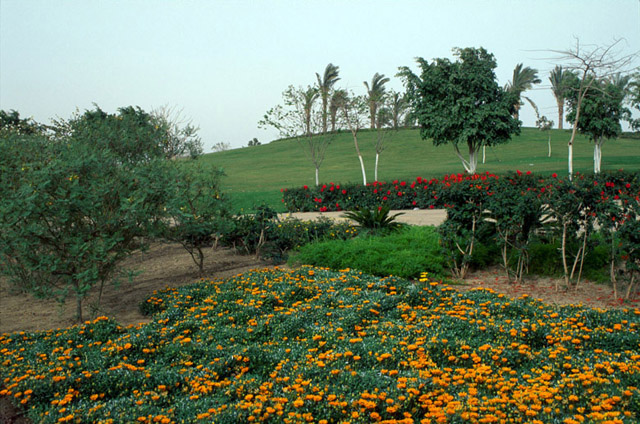 Al-Azhar Park | Plants, trees and flowers begin to transform the