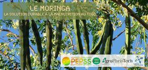 Mettons du PEPSS dans leur vie ! : L'arbre miracle, contre la malnutrition au Togo