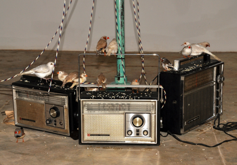 20100914000705-birds4
