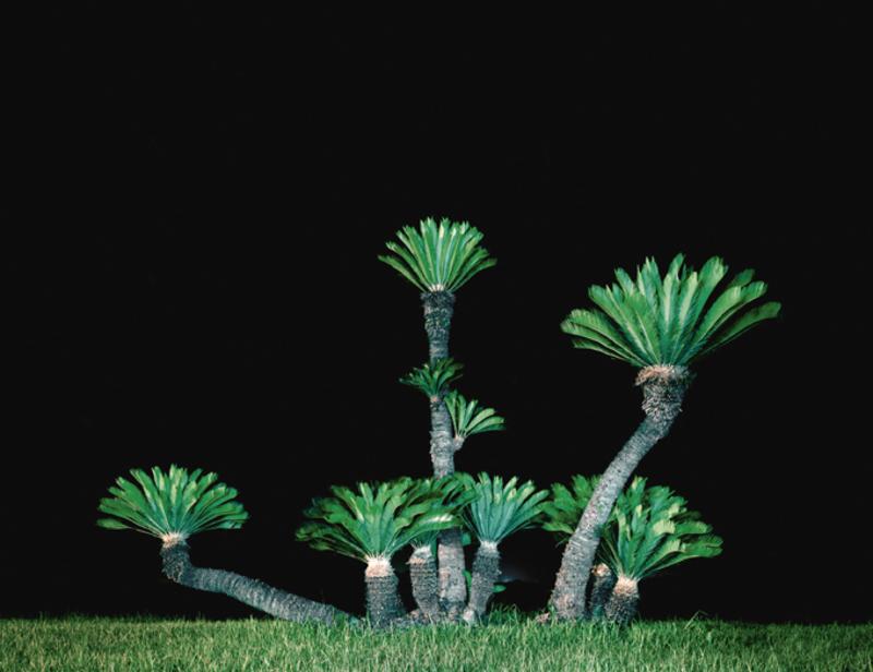 20140504112340-figure_3_julianeeirich_palm_tree_ii_itoshima