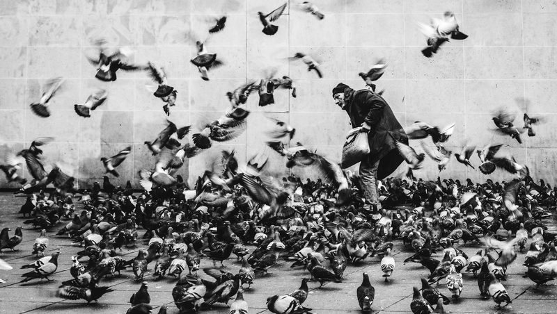 20170822144455-man-with-pigeons-in-paris-france