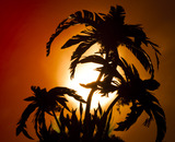 20110522031905-sunset_palm