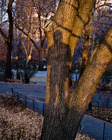 20110525141403-me_tree_shadow_sm-7379