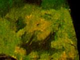 20130310215425-hippoattuilleriesbymanet01