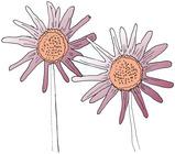 20130615222724-flower4