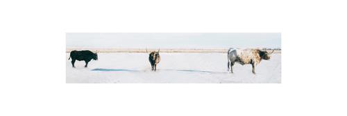 20160729200227-longhorns