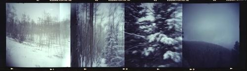 20160729200745-snow_trees_6-1
