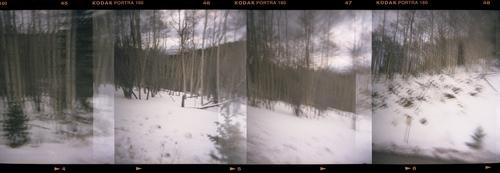 20160729200803-snow_trees_3-3