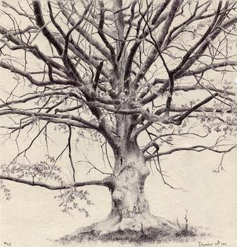 20160816204233-tree47_72dpi
