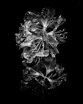 20160927122437-backyard_flowers_in_black_and_white_01_4x5