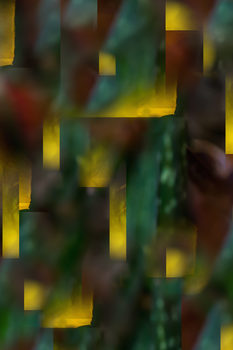 20170125164237-dias_flora_abstrata_ii-2