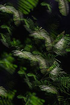20170125164247-dias_flora_abstrata_x
