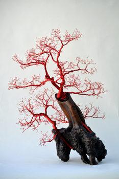 20170219022934-bonsai-30-blurb