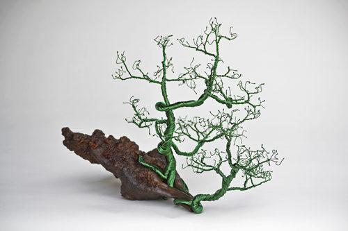 20170219025649-bonsai-1-blurb