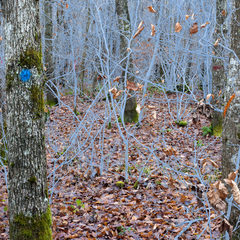 20170221190432-helen_sear_becoming_forest_06