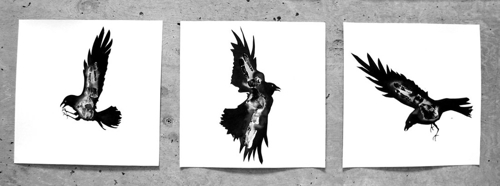 Crows__small__copy