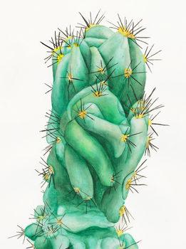 20170306024841-cactus-500px