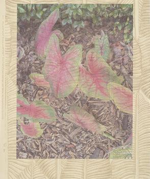 20170620214610-flutteringhearts