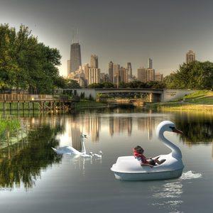 20170725200117-swans
