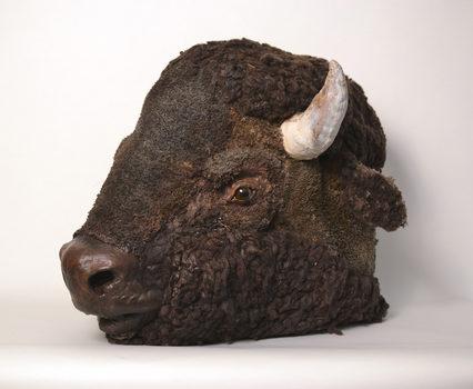 20170727125212-8_rachel_frank_american_bison_i