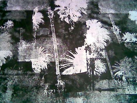Palm_tree_painting