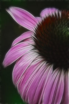 20171009001739-pink-in-bloom-rhonda-barrett