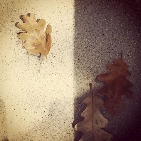 20171015185654-three_leaves_in_shadow_and_light