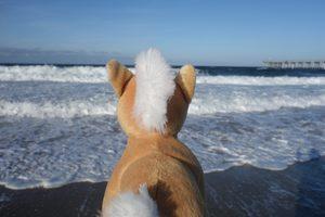20171024020347-seahorse
