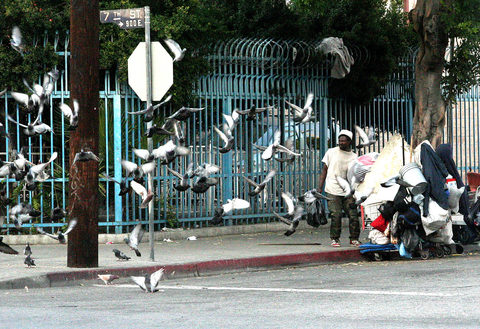 20171113001910-_apparition_of_pidgeons_img_2515