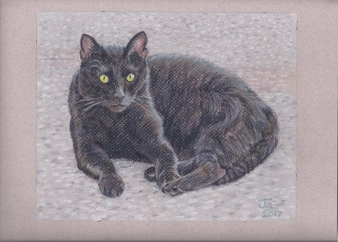 20180126013659-sasha_the_cat_2017