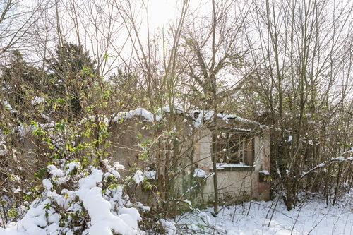 20180312024800-jardin-tropical-winter-14