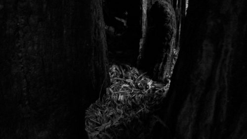 20180402193449-image1__inka_juslin__burnt_tree__big_sur__2014__color_photography_8x11_inc