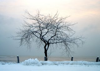 20180612134006-35mm_winter-tree