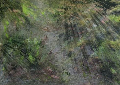 20180722194239-algae_exploration_-_cole_sternberg_-_2017