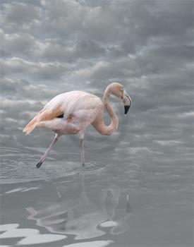 Medow_c_flamingoi