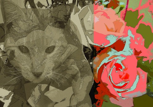 Cat_and_roses