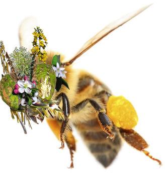 20190306210950-pollen-basket_mask