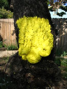 Rath_tree_peel_2008