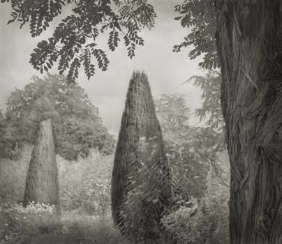 Beth_dow_trees_hidcote