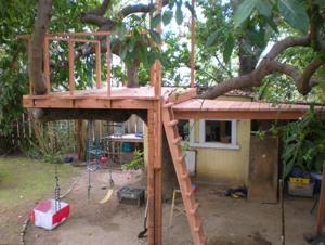 Tree_house_1