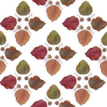 Callery-pear