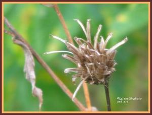 2008_autumbliss-igirex08-nature_066