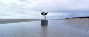 Ostrich_1_mala