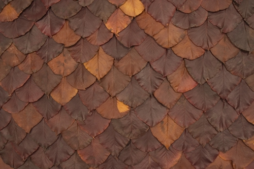 Maryivymartin_leaf_detail_1