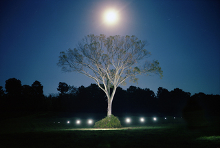 Showdowless_tree_01_2002
