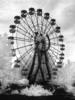 Chernobylnfrared2008_19