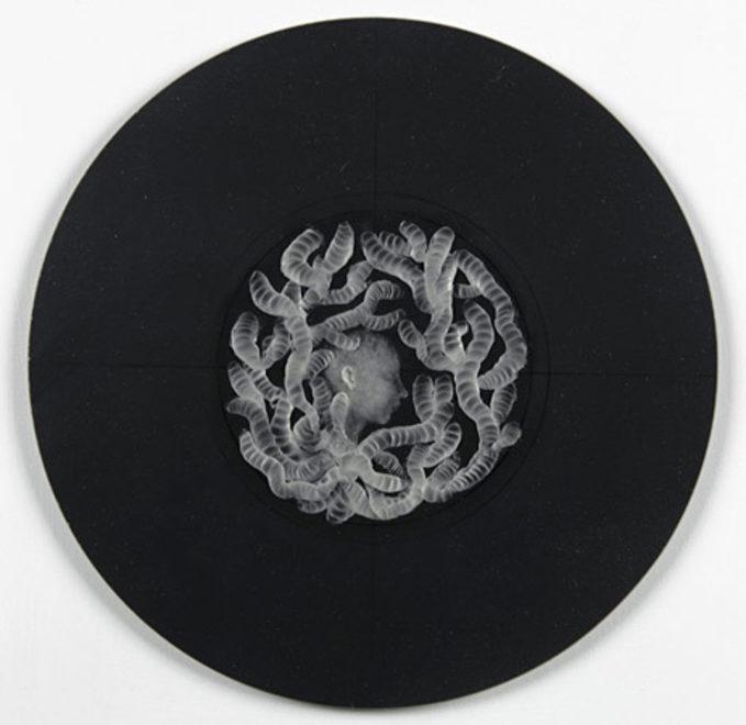 Felicity-powell-wax-01