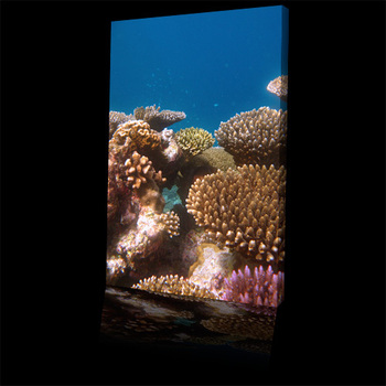 Sea_coral_reef_array500b