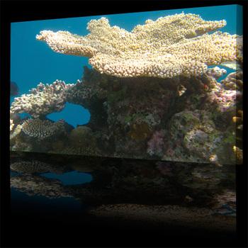Sea_coral_garden_gateway500b