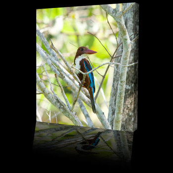 Wild_bird_photos_kingfisher500b